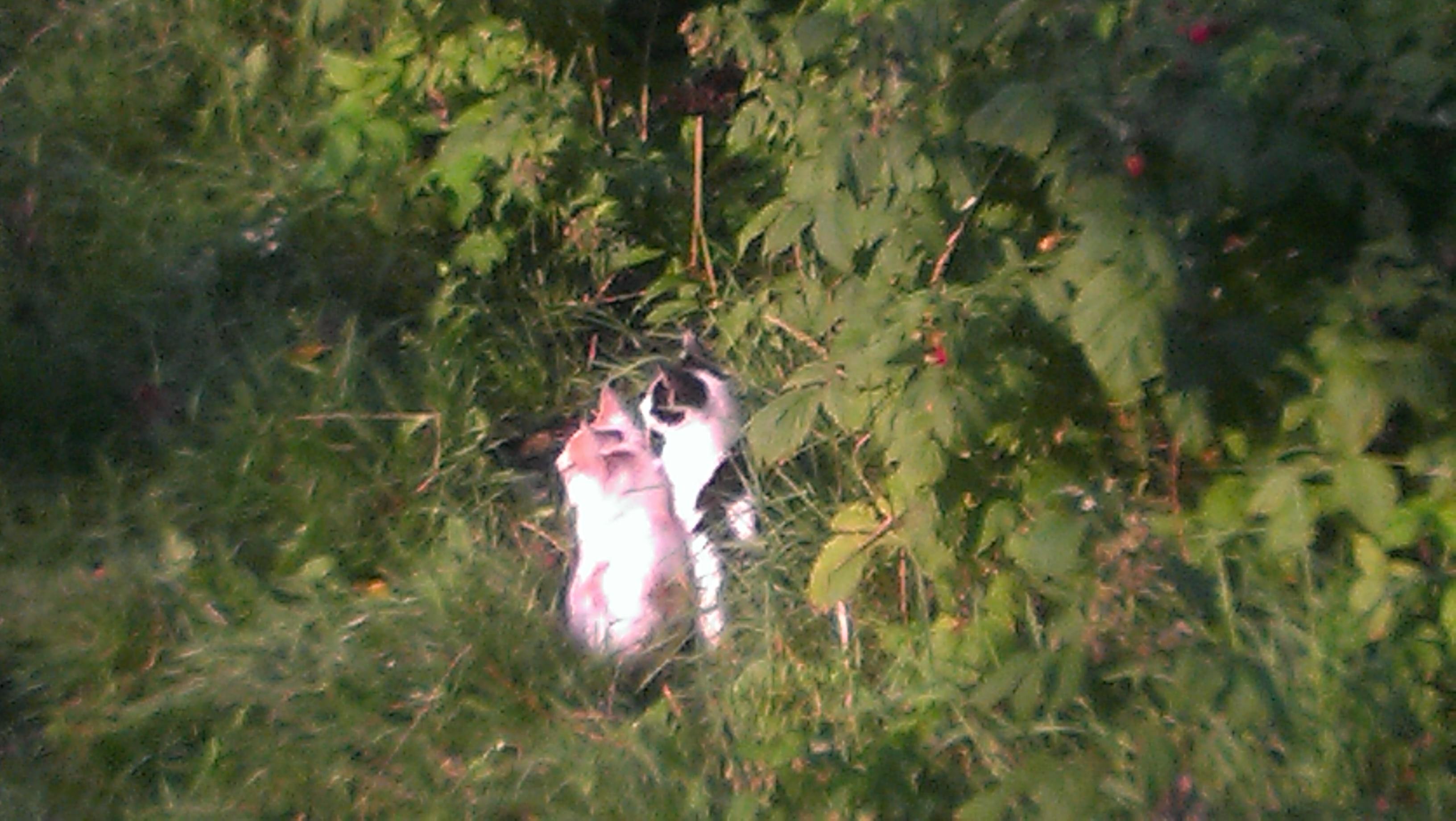 koty-w-malinach